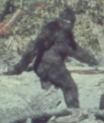 Foto del El Yeti El hombre de las nieves Bigfoot reales